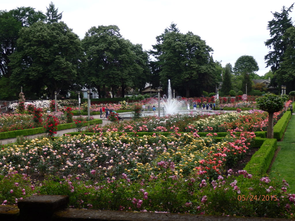 large rose garden with fountain